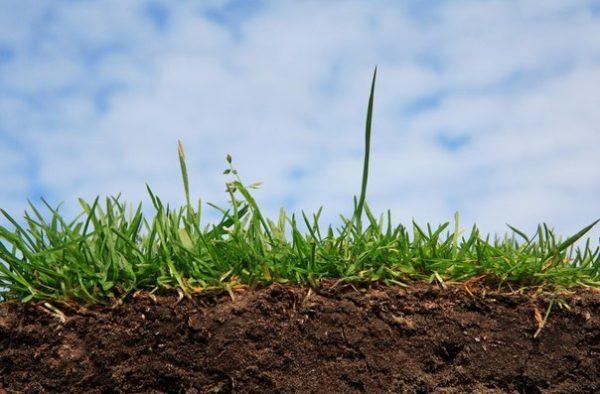 Как быстро определить кислотность почвы на участке?